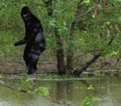Bigfoot 3
